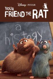 Twój przyjaciel szczur